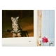 Carte postale CHAT FLEUR (lot de 2 cartes)